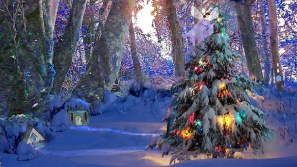 Christmas trees in Fairy Land